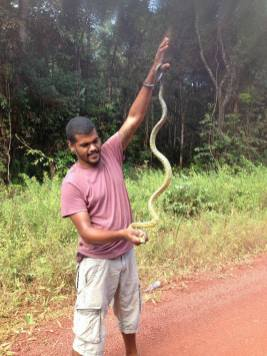 lange slang gevonden suriname