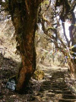 nepal-vlaggetjes-himalaya-trekkin