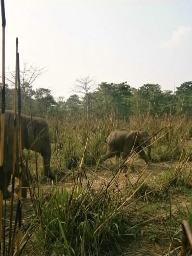 olifant nepal