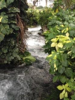roaring river negril
