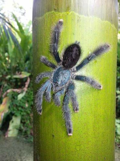 spin in suriname tijdens jungletocht