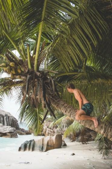 strand la digue seychellen palmboom beklimmen
