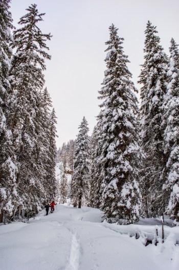 tirol oostenrijk Sneeuwwandelen
