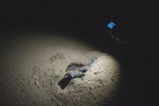 turtle tour zuid afrika schildpadden st lucia nest
