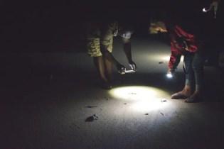 turtle tour zuid afrika schildpadden st lucia