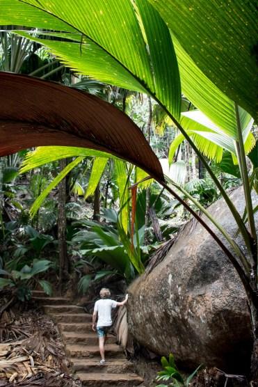 vallee de Mai wandeling praslin seychellen