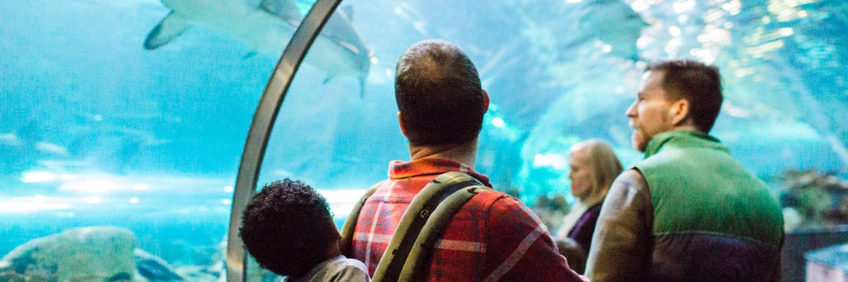 Why Ripley's Aquarium of the Smokies needs to be on your Gatlinburg itinerary