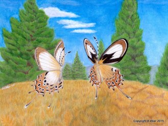 "Gold Drop Helicopus Butterflies Colored Pencils on Bristol Paper, 8"" x 10"""
