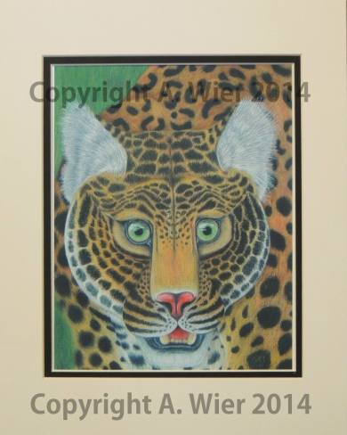 "Leopard Study #1 8"" x 10""; Colored Pencil Nov, 2014"