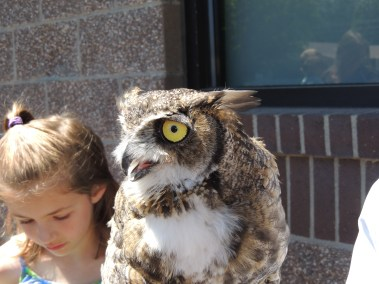 Great Horned Owl taken by A. Wier