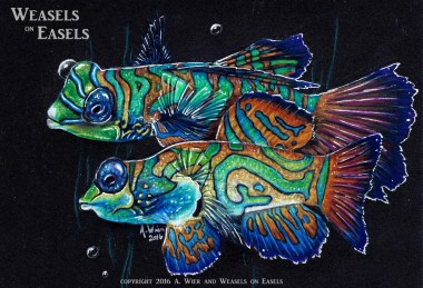 """Mandarin Fish"" Colored Pencil"