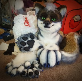 Zener the Grey Coyote - Partial