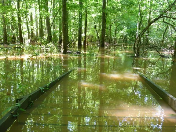 The elevated boardwalk trail in Congaree NP disappears into high flood waters.