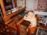 Loom is for sale in NY. I just want the Puppy!