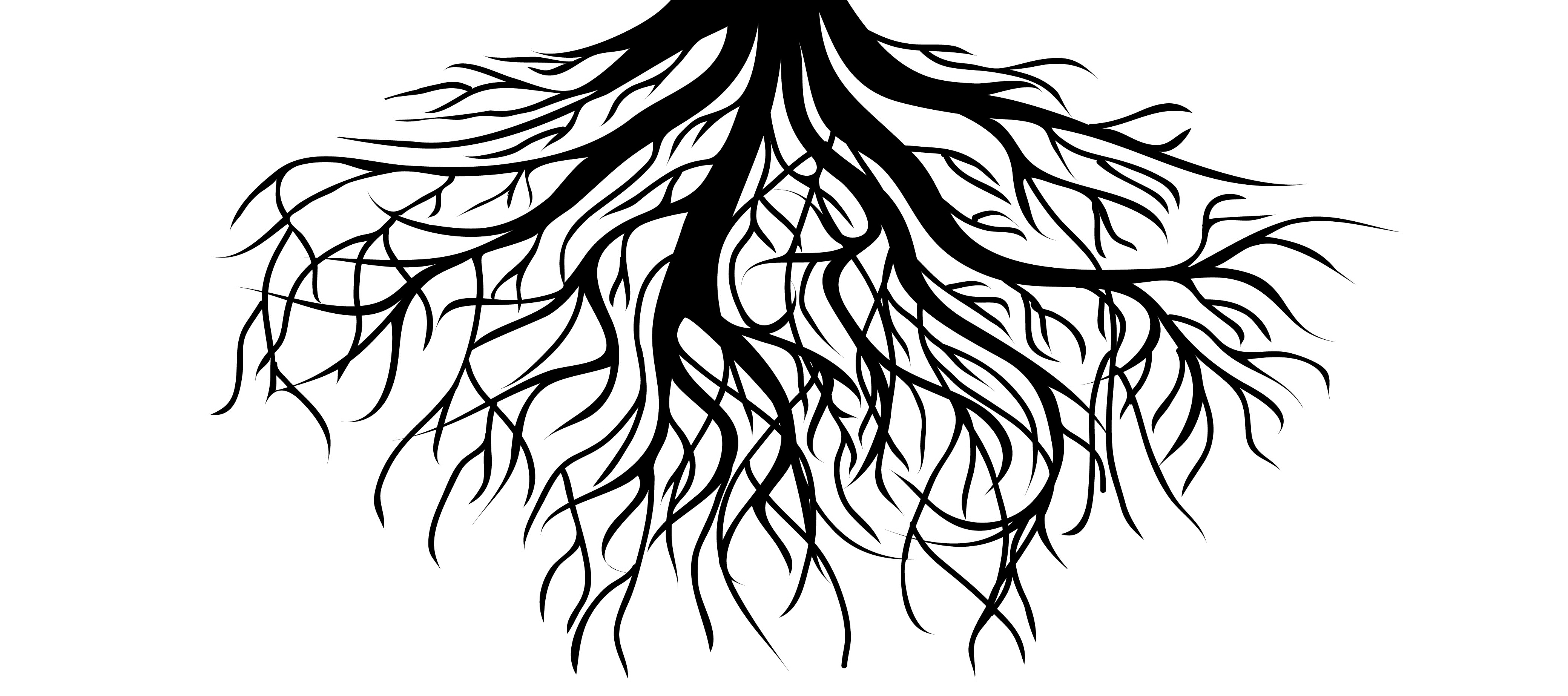 Image result for roots