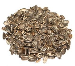 Raw In Shell Sunflower Seeds Bulk Bag
