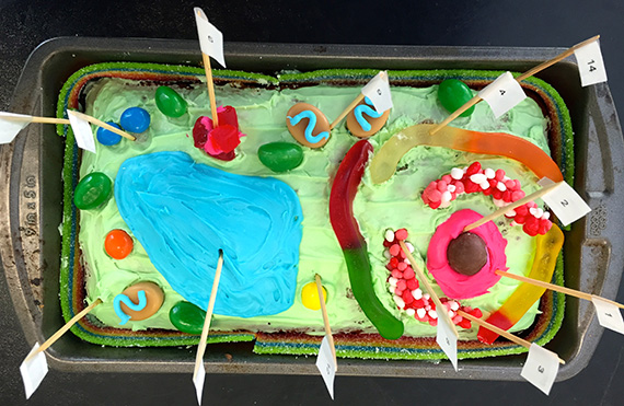 easy diagram of plant cell towing relay wiring new art: middle school science - weaver street market