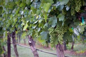raylen-vineyards