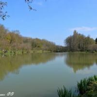 Étang de Suillyzeau - Plan d'eau de Suillyzeau