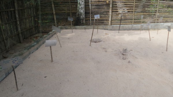 TURTLE HATCHERY GALBOKKA