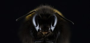 close up picture of a bee