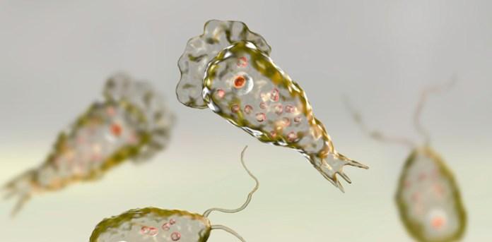 Ameba 'comecerebros', um parasita mortal