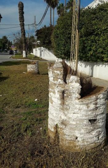 carthage-palmiers-hb