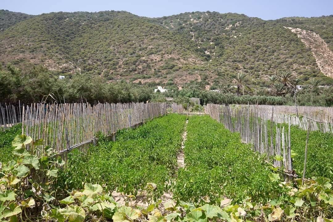 Après les Oasis de Gafsa, deux sites tunisiens inclus dans le patrimoine agricole mondial