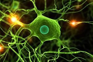 Estudiar Biología: ¡mucho más cerca de los organismos vivos!