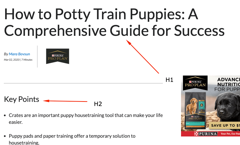 Heading at the top of a page about how to train puppies