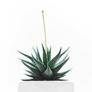 succulent-pxb-900×900-a