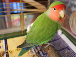 hobbies pets birds love