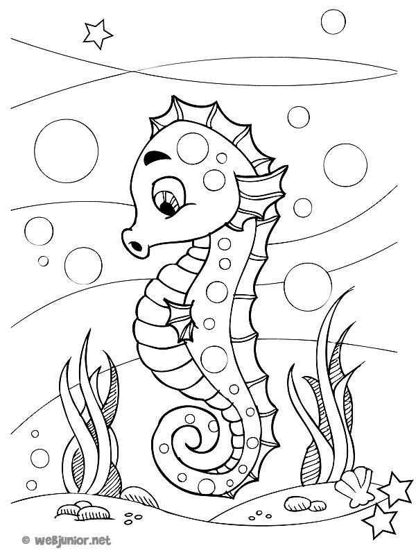 Petit Hippocampe : coloriage Animaux gratuit sur Webjunior