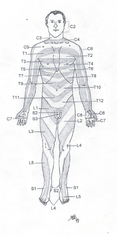 Nerve Pain Spinal Nerve Pain Chart