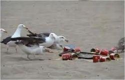 Хлапета дават разхлабително на чайки…