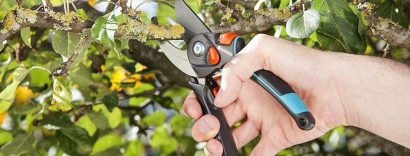 Confinement et jardinage: La taille des rosiers, ou celle des habitudes ?