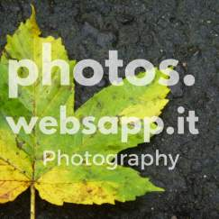 photos.websapp.it