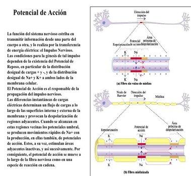 Los 9 sistemas del cuerpo humano y sus generalidades   Webscolar
