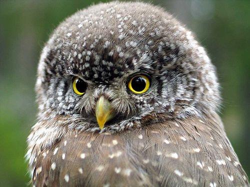 68081c4c093e17bb5261638cc407bf39d19a8221 - 8 Bird Species Extinct In The Last 20 Years