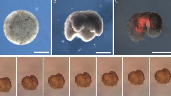 İlk Yaşayan ve Programlanabilen Organizma Üretildi