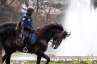 brigade-equestre-police-municipale-toulouse