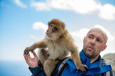 singe sur l'épaule