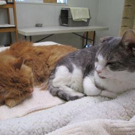 10K Grant for Animal Care