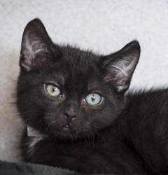 Napa County Animal Shelter Kittens
