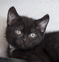 Oscar The Kitten