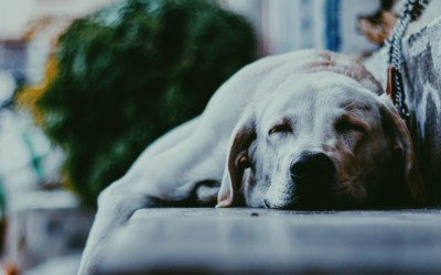 Doesn't your Dog Deserve Better than Human Waste?