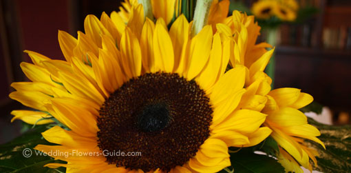 Real Weddings  Emmas Sunflower Wedding Fowers