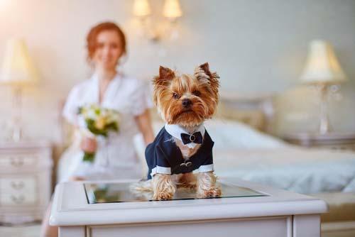 Wedding Pet Portrait