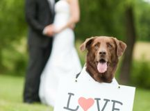 15 Fun Photo Ideas for Couples & Their Wedding Party ...