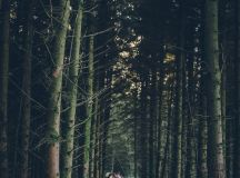 A Magical Wicklow Wedding Photo Shoot by Emma Russell ...